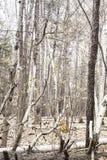 森林在秋天/及早冬天末期 库存图片