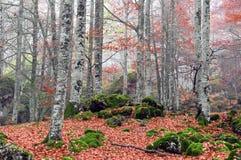 森林在秋天 免版税库存照片