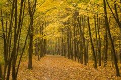 森林在秋天 库存照片