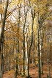 森林在秋天 免版税图库摄影