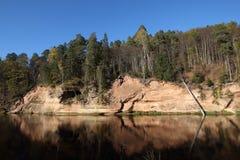 森林在秋天 Gauja国家公园 免版税库存图片