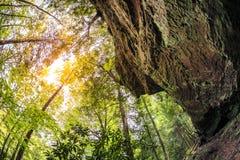 森林在肯塔基 库存照片