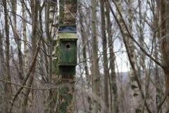 森林在苏格兰采取的鸟箱子 库存照片