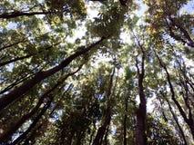 森林在菲律宾 免版税库存照片