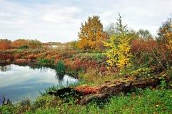 森林在葡萄酒颜色的秋天风景-小河长满与在多云天气的芦苇 免版税库存照片