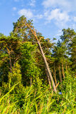 森林在阳光下 免版税库存照片
