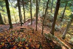 森林在阿尔根金族公园,加拿大 库存图片
