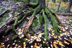 森林在阿尔根金族公园,加拿大 免版税库存照片