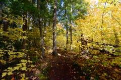 森林在阿尔根金族公园,加拿大 库存照片