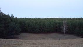 森林在10月2日 库存照片