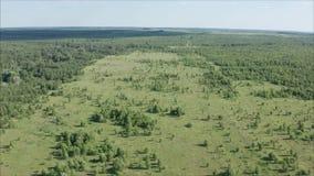 森林在7月 森林公路长满与草 领域长满与森林 r 影视素材