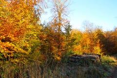 森林在11月 图库摄影