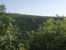 森林在以色列 库存照片
