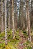 森林在Berchtesgadener土地,德国 库存照片