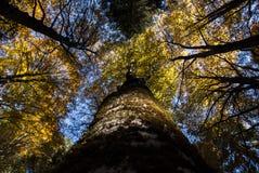 森林在Cansiglio 免版税图库摄影