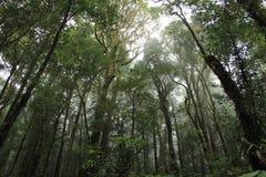 森林在Chaingmai,泰国 库存图片