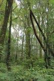 森林在Chiangmai 免版税库存图片