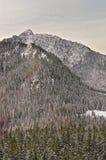 森林在Kasprowy扎科帕内Wierch在Tatra在冬天登上 库存图片