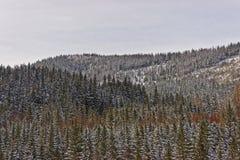 森林在Kasprowy Wierch在扎科帕内在Tatra在冬天登上 免版税库存图片