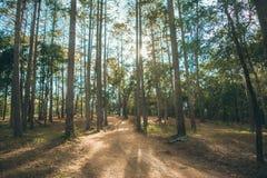 森林在Nam Nao国家公园 库存照片
