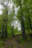 森林在Polyanitsky公园 免版税图库摄影