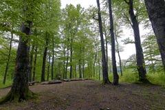 森林在Polyanitsky公园 库存照片