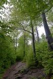 森林在Polyanitsky公园 图库摄影