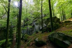 森林在Polyanitsky公园 免版税库存图片