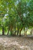 森林在Saraburi泰国 库存图片