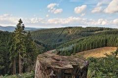 森林在Sauerland,德国,欧洲 免版税库存照片