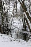 森林在The Creek的冬天 库存图片