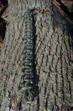 森林地卡莫Paracord镯子反对木头 免版税库存图片
