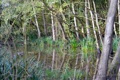 森林地反射 图库摄影
