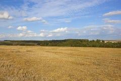 森林地和被收获的麦子 免版税库存照片