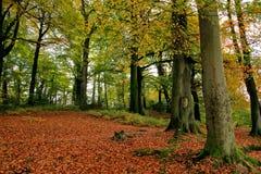 森林地场面 库存图片