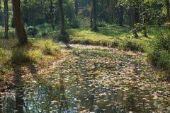 森林地小河在秋天 免版税库存图片