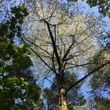森林地机盖 库存图片