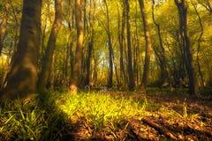森林地板在春天 库存照片