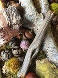 森林地板的特写镜头作为秋天装饰 免版税库存照片