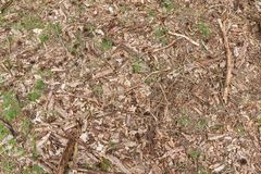 森林地板背景与木片、小树枝、叶子、草和杉木锥体的 免版税库存照片