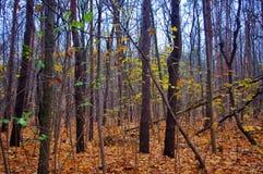 森林地板覆盖着与叶子 库存照片