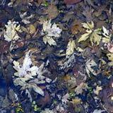 森林地板风景伊利诺伊 免版税库存图片