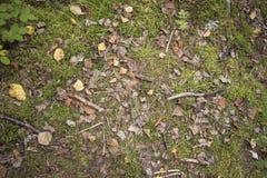 森林地板 图库摄影