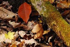 森林地板 库存照片