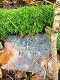 森林地板 免版税图库摄影