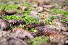 森林地板 免版税库存图片
