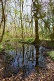 森林地池塘在春天 图库摄影