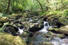 森林地瀑布, dartmoor natinal公园,德文郡 库存照片