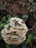 森林地真菌 库存照片