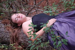 森林地睡美人 免版税图库摄影